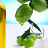 image of olive trees  - closeup of a branch of olive tree with olives and a bottle of olive oil in the background - JPG
