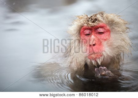 Male snow monkeys Japanese macaque bathe in onsen hot springs of Nagano, Japan