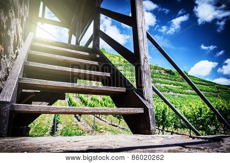 Summer Landscape With Vineyard And Stairs To Watch Tower