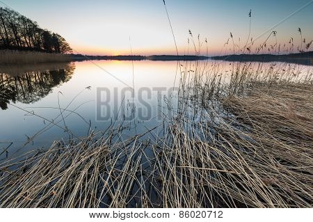 Lake Landscape With Reeds