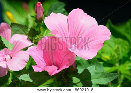 Beautiful pink flower in flowerbed