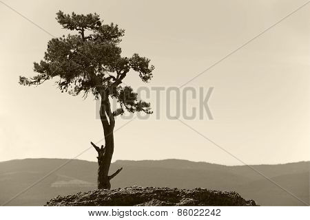 Landscape With Lonely Pine Tree And Mountain In Sepia Tone