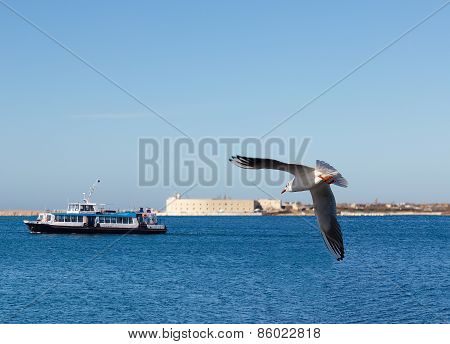 Crimea. Seagull Above The Sevastopol Bay.