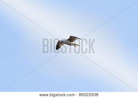 Seagull in seventh heaven