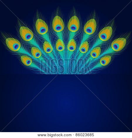 Vector Peacock Feathers On Blue Background.