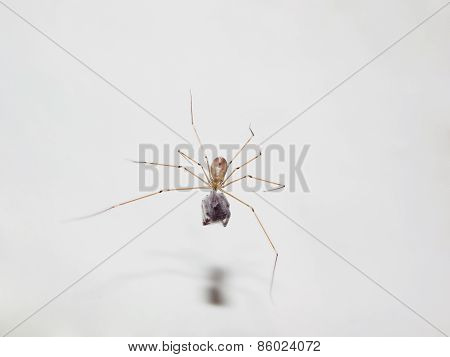 Spider with its prey