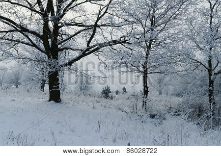 Winter ,foggy ,cloudy morning in Poland