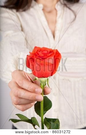 White Shirt Woman Offering Red Rose