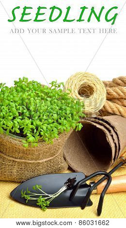 Cress Salad On The Flower Bed With Rake, Shovel, Peat Cups, Rope Isolated On White