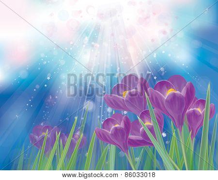 Vector spring crocuses flowers.