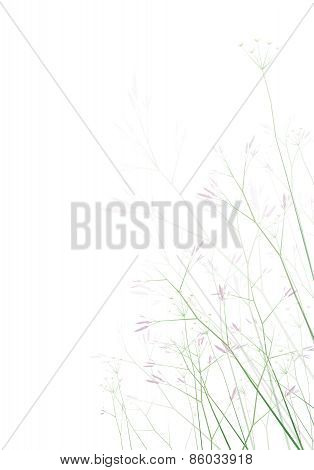 Vector flowers isolated.