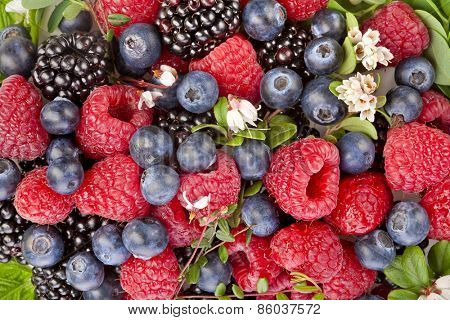 sweet forest berries with flower surface top view close up background