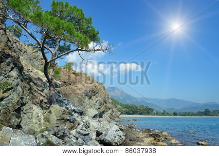tree grows on the rocky shore