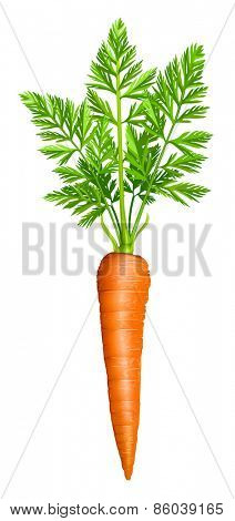 Carrot. Vector illustration.