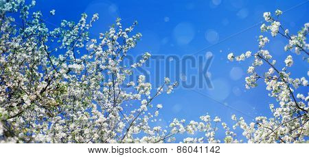 Blossoming tree branches on sky background.