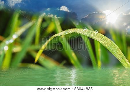 Eco Background With Dew Drops And Water