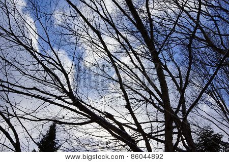 Branches Against The Sky