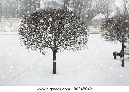 Winter snowy park.