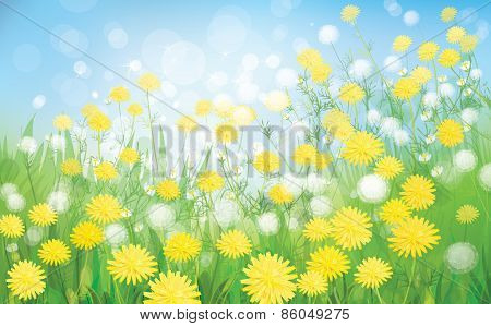 Vector dandelions flowers background.