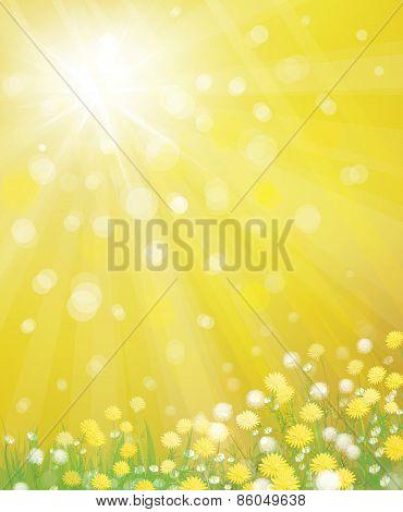 Vector dandelions flowers background.