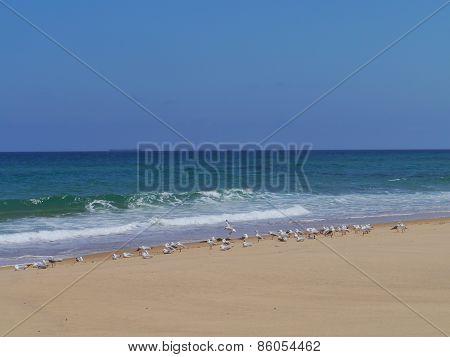 Garlie beach in Australia
