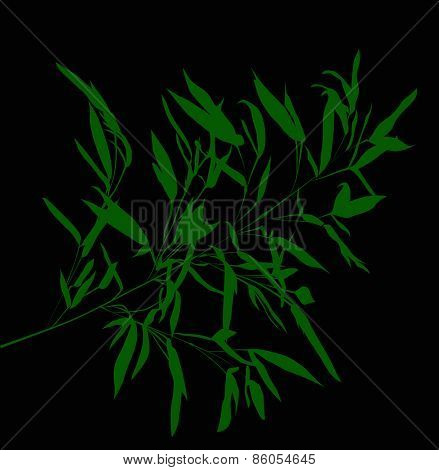 illustration with green bamboo branch isolated on black background