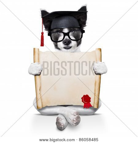 Diploma Dog
