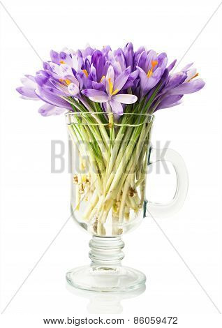Crocuses In A Glass