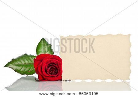 Red Rose And Blank Gift Card For Text On White Background
