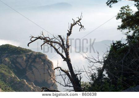 Very dry tree