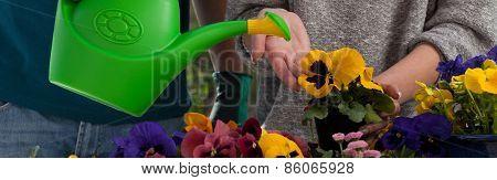 Watering Colorful Flowers