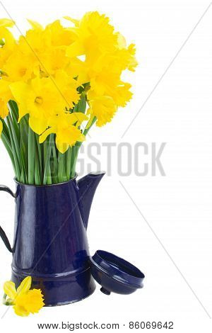 spring narcissus