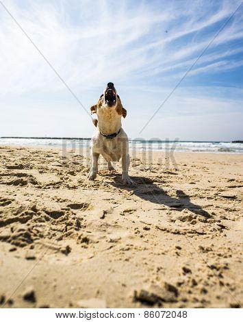 jack russel terrier at sea