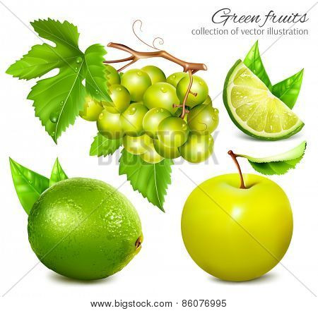 Fresh and ripe green fruits. Collection of vector illustration
