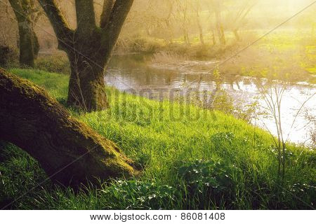 Landscape with  streaming river and grassy shores at sunset