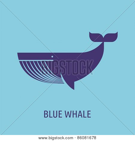 vector whale illustration and icon
