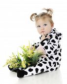 stock photo of lap  - An adorable baby girl with a lap full of wild flowers - JPG