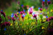 image of small-flower  - Beautiful small flowers growing in a meadow in spring - JPG