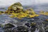stock photo of sea-scape  - A beautiful sea scape with rocks waves and kelp - JPG