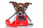 stock photo of telephone operator  - jack russell dog with glasses as secretary or operator with red old dial telephone or retro classic phone - JPG