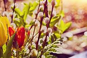 picture of willow  - outdoor easter bouquet of flowers with tulips and willows vintage version  - JPG