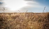 picture of weed  - Dried  field filled with weeds and plants in a sunny spring day - JPG