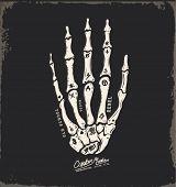 picture of skull  - skull hand illustration - JPG