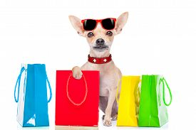 pic of puppy christmas  - chihuahua dog holding a shopping bag ready for discount and sale at the mall isolated on white background - JPG