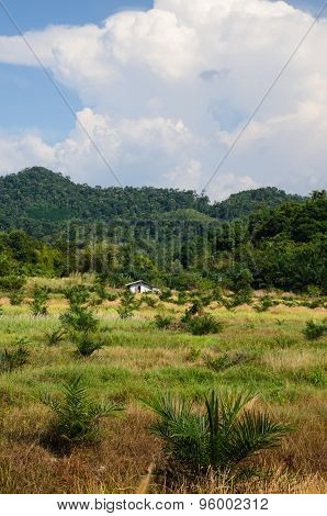 Cereal Cropping On The Hills Of South Thailand