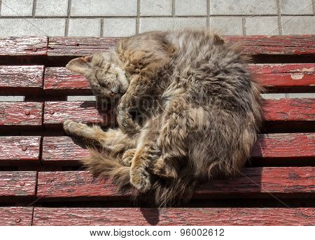 Homeless Cat Sleeps At A Bus Stop