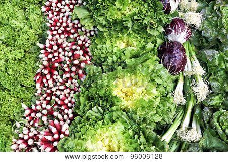 Fresh organic leafy lettuce radish spring onion on a market stall