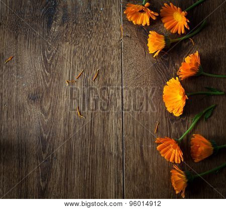 Pot Marigolds or English Marigolds (Calendula officinalis), fresh blossoms on wooden background