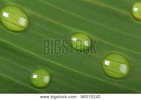 Green leaf with droplets, closeup