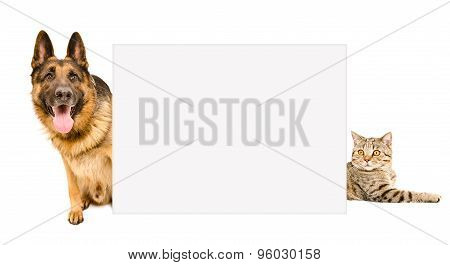 German Shepherd and cat peeking from behind a poster